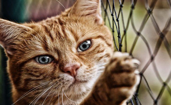 В интернете собирают деньги на первые похороны кота в космосе