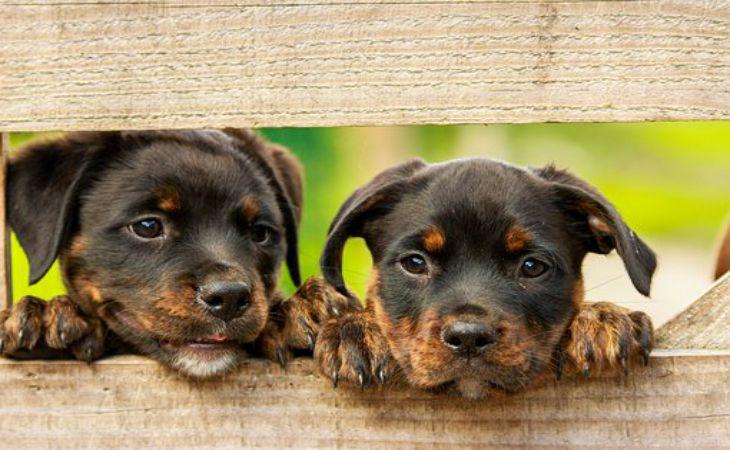 Как позаботиться о глазах собаки: советы опытных ветеринаров