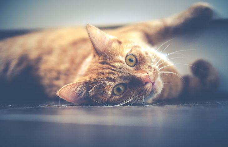 Ученые считают домашнюю еду опасной для кошек