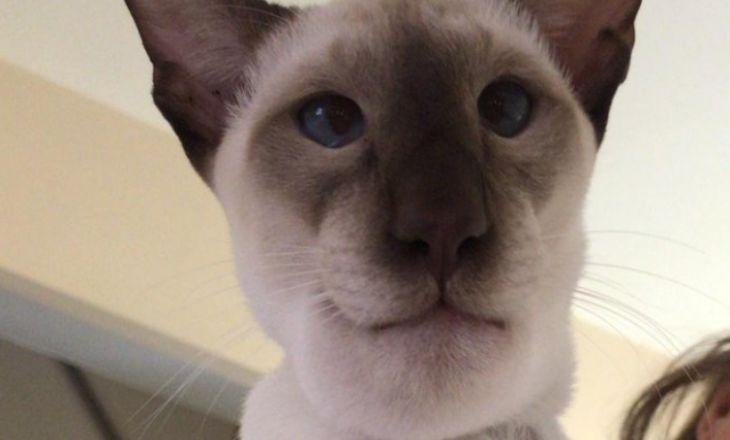 Кот съел осу и обрел популярность в сети