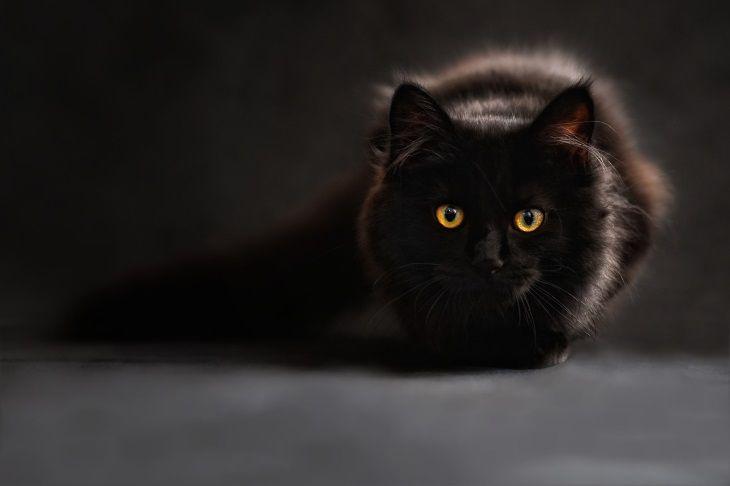 Ученые: домашняя еда может представлять опасность для здоровья кошек