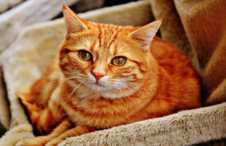 Что нужно знать о кошках: мнение экспертов
