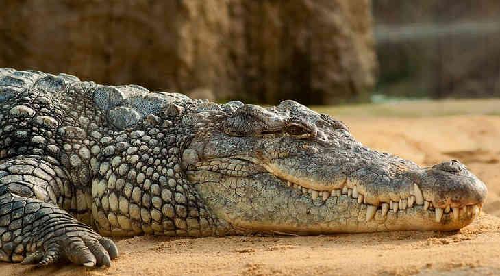 Друзья вытащили мальчика из пасти крокодила