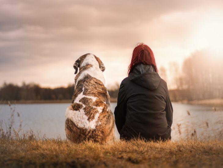 3 важнейшие команды, которые должна знать каждая собака