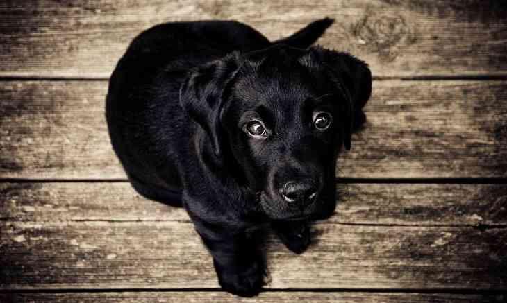 Топ-5 пород собак, которые не лают