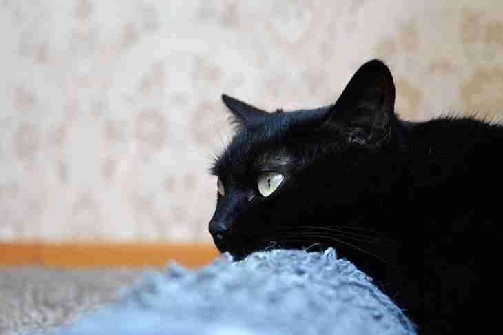 Как приучить кошку к когтеточке: советы профессионалов