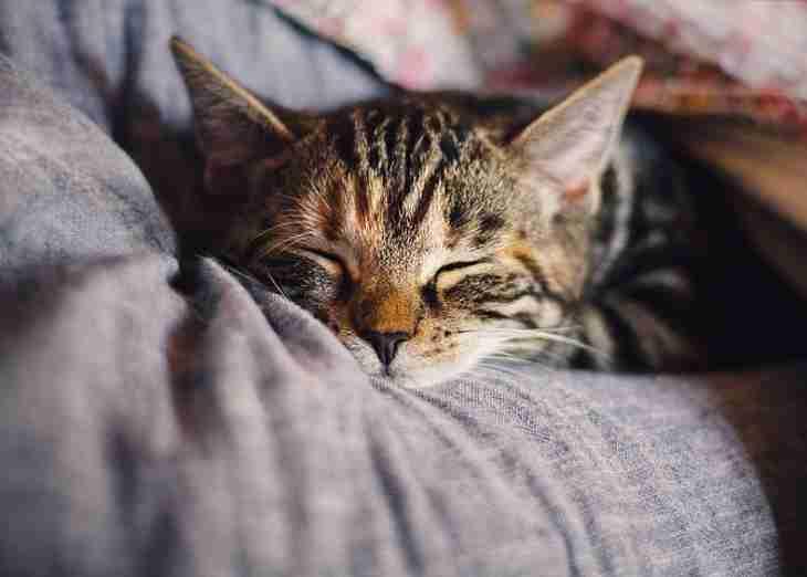 Как понять, что ваша кошка счастлива