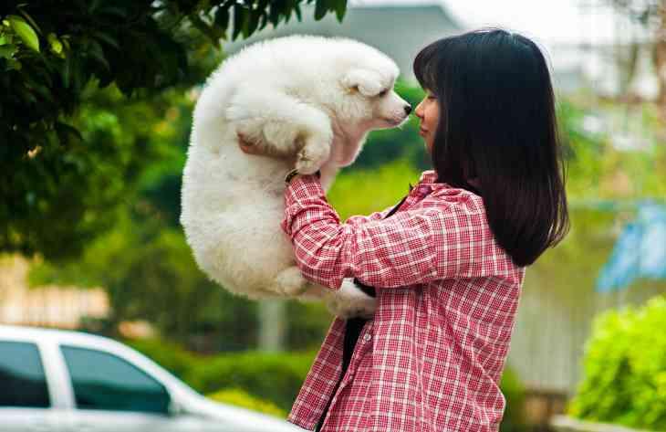 Ученые выяснили, что собаки испытывают стресс вместе с хозяином