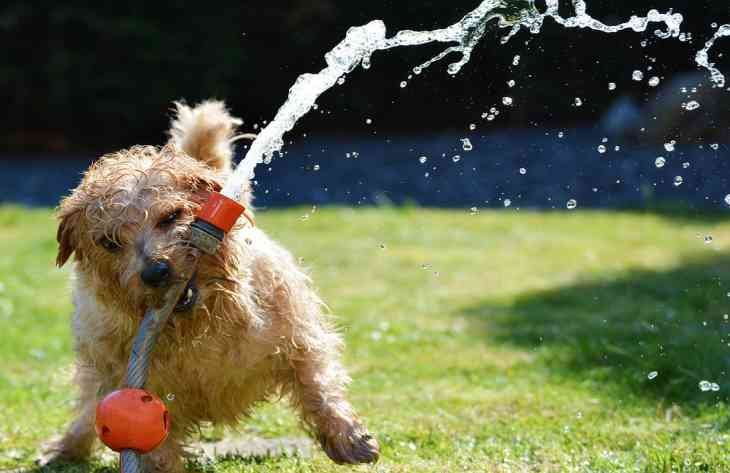 Как уберечь питомца от теплового удара: советы ветеринара