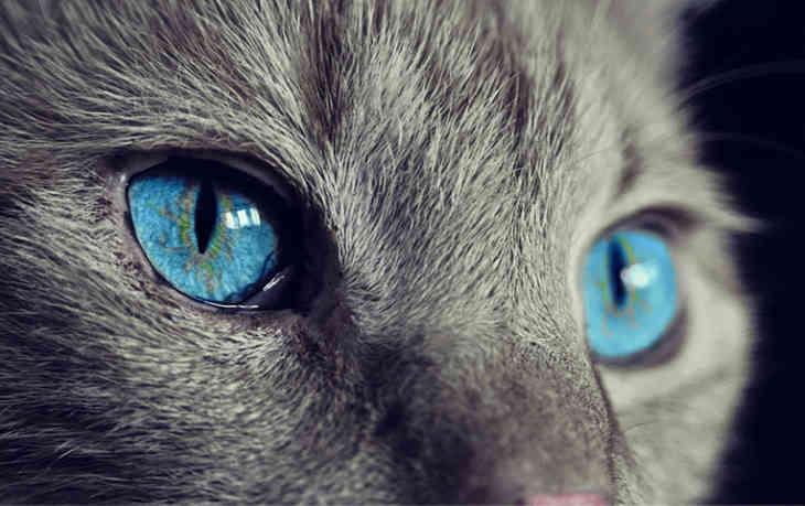 Найден способ снижения уровня аллергена на кошек