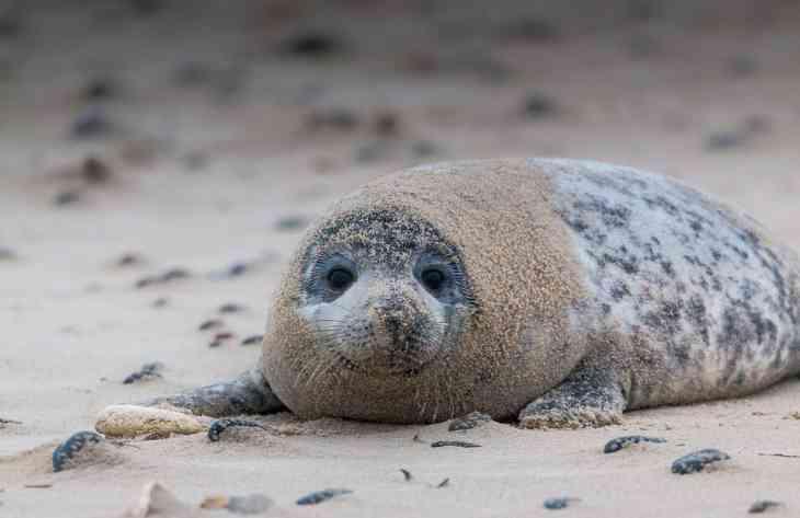 """Ученым удалось научить тюленей напевать тему из """"Звездных войн"""""""