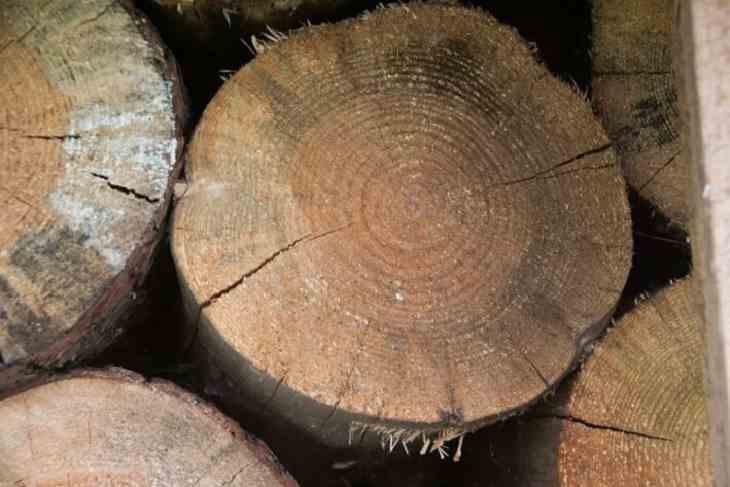 В Беларуси сокращается площадь вырубленных из-за короеда лесов