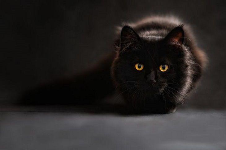 Кошки умнее собак. Но скрывают это, чтобы не заставили тапочки носить