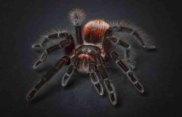 Одиночество приводит пауков к агрессии: результаты исследования