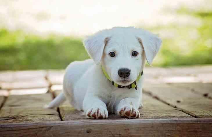 Как правильно воспитывать собаку: советы кинолога