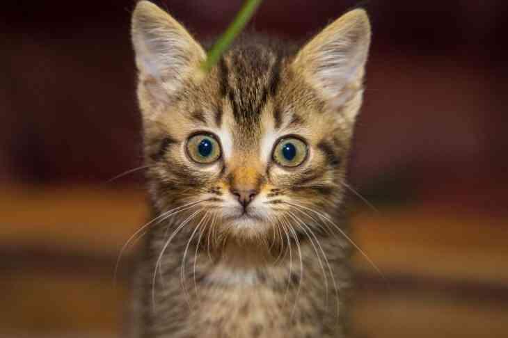 Владельцам кошек и собак упростили вывоз животных за пределы страны ЕАЭС