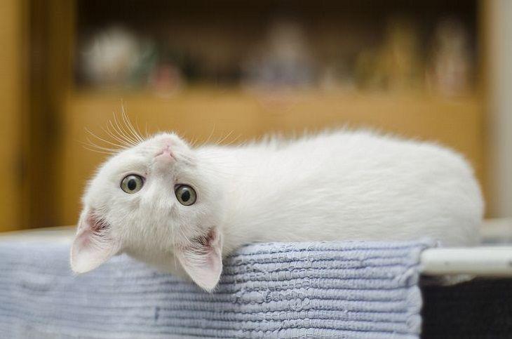 Как помочь адаптироваться кошке на новом месте: советы специалистов
