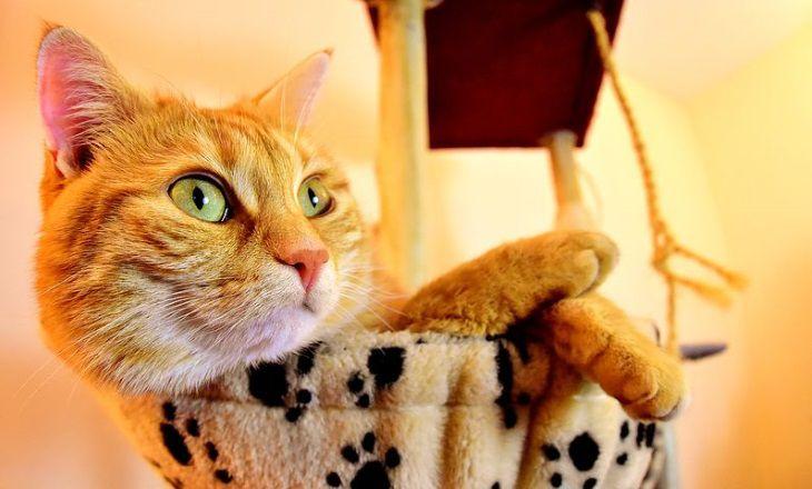Как узнать, кого в семье больше любит кошка: советы экспертов