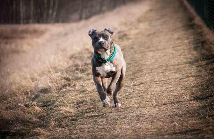 Как себя вести при нападении собаки: советы кинолога
