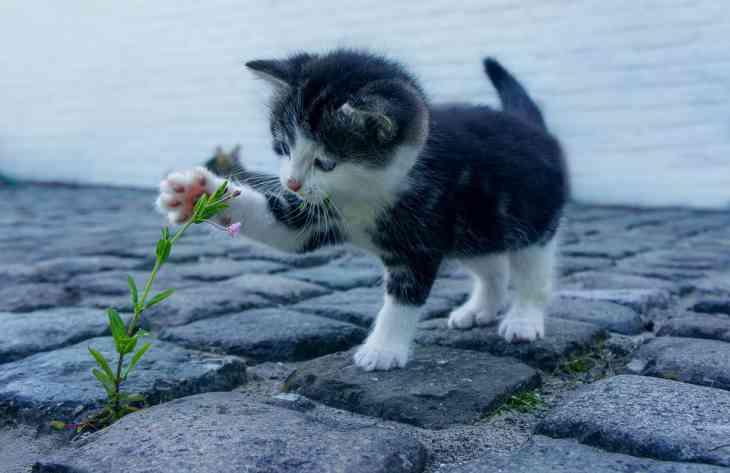 Владельцы кошек подвержены шизофрении: результаты исследования