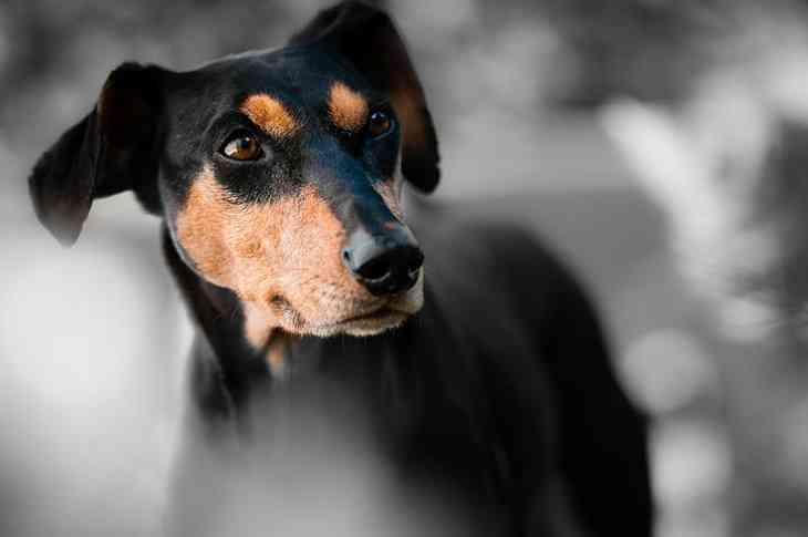 Самые сильные собачьи укусы происходят в домашних условиях: исследование