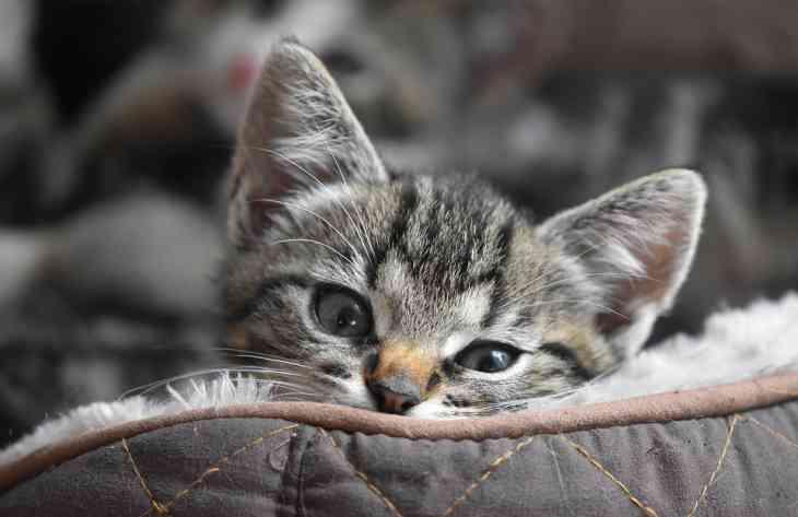 5 причин для того, чтобы завести кота
