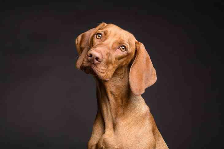 Ученые создали пульт для управления собакой, и он работает