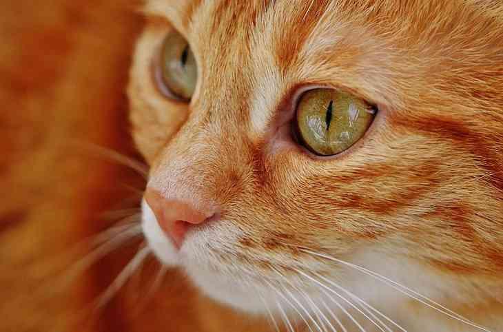 Ученые: мурлыканье кошек способно исцелять людей
