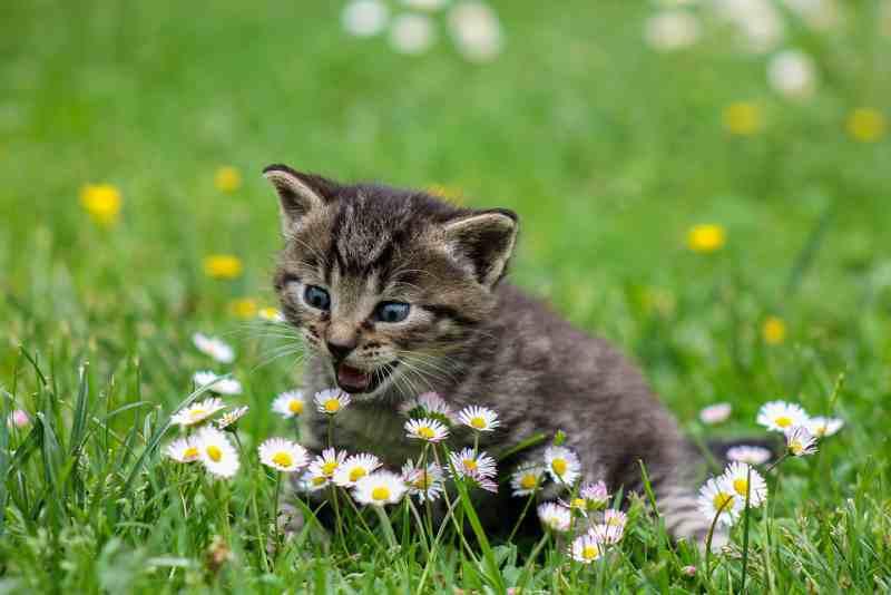 Ученые поняли, зачем кошки едят траву