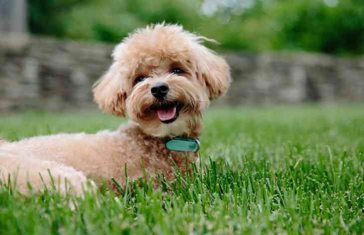 Эксперты составили топ-7 пород собак для содержания в квартире