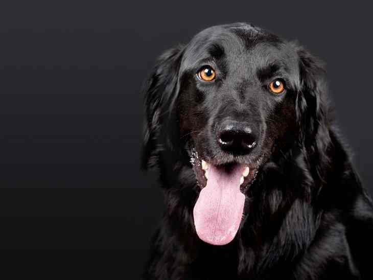 Собаки способны почувствовать, когда у человека может начаться приступ