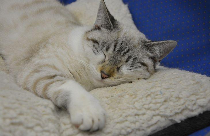 Почему кошка любит спать с хозяином: топ-7 причин