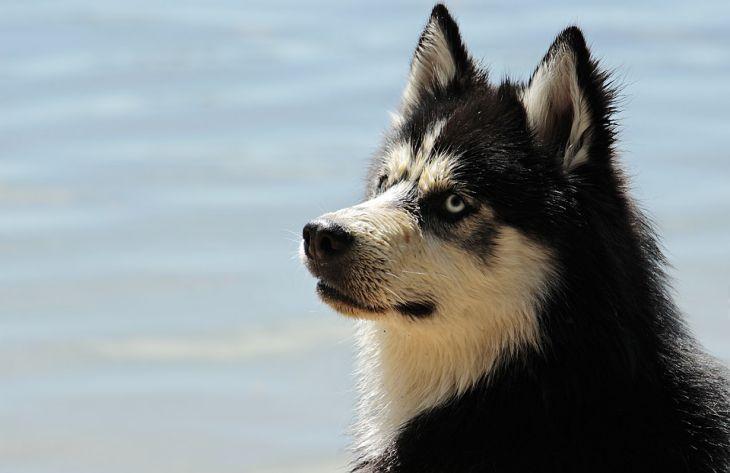 Специалисты развеяли популярные мифы о собаках