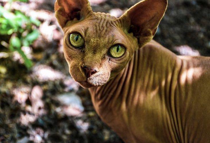 Врачи заявили об опасности кошачьих царапин