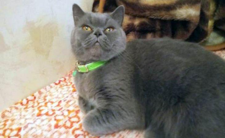 Россиянин за $225 тыс. продает кошку «исцеляющую от похмелья»