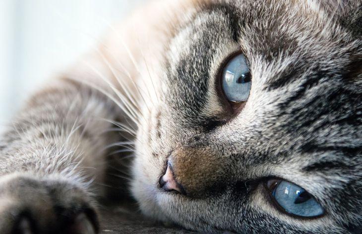 Как понять, что кот вас любит