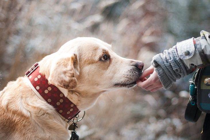 Названы самые лучшие породы собак для детей