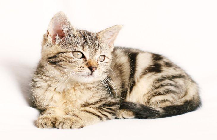 Ученые нашли способ, как сделать домашних кошек счастливыми