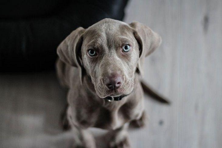Названы 4 породы собак, которые не вызывают аллергию, их шерсть не создаёт проблем