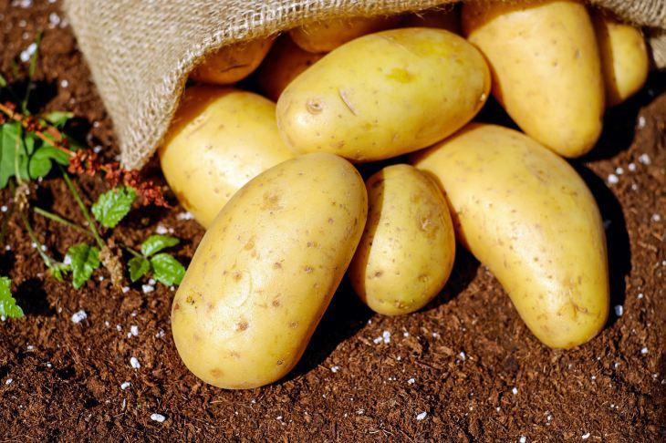Что делать чтобы картошка не прорастала