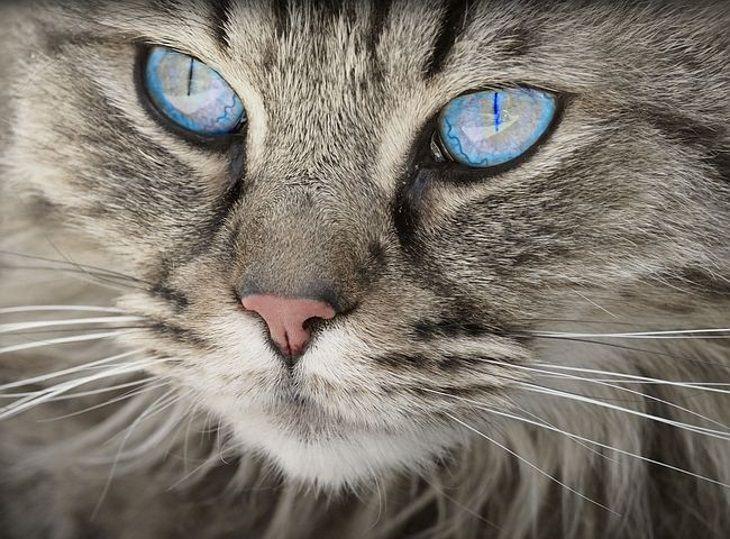 Тайные союзники: кто помогает кошкам отпугивать врагов