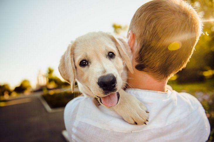 Ученые доказали связь лишнего веса хозяев с ожирением у собак