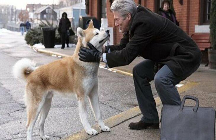3 лучших фильма про собак