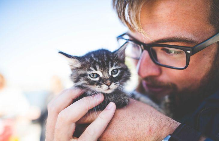 Специалисты выяснили, привязаны ли кошки к своим хозяевам