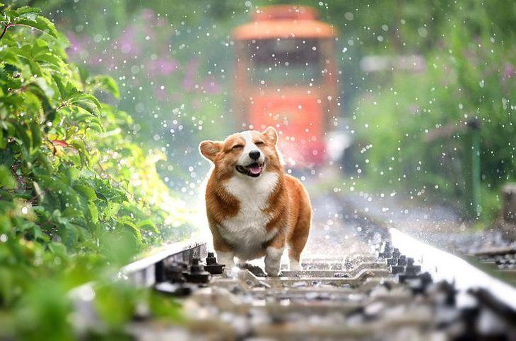 Ученые опровергли миф о высоком интеллекте собак