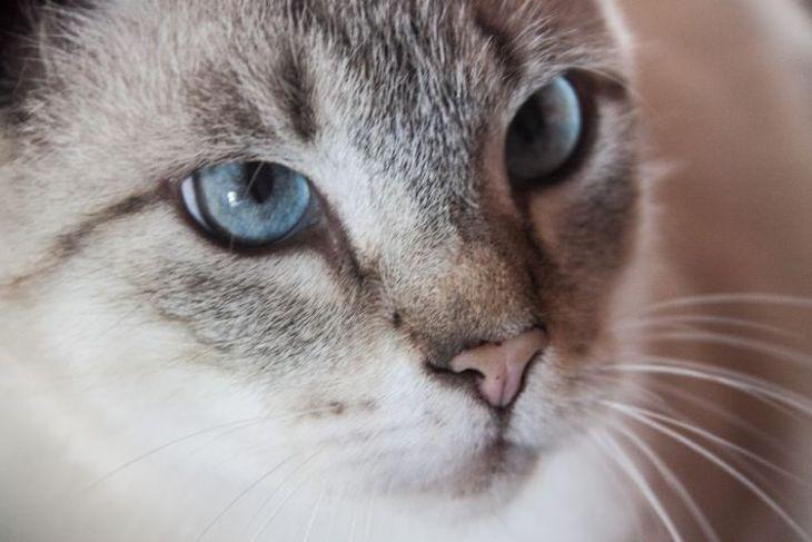 Коту понадобилась капельница после ночи вотеле спятью кошками