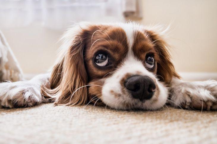 Психологи рассказали, как правильно выбрать домашнее животное для ребенка