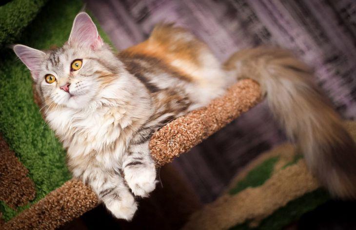 Какие породы кошек подходят для семьи с ребенком