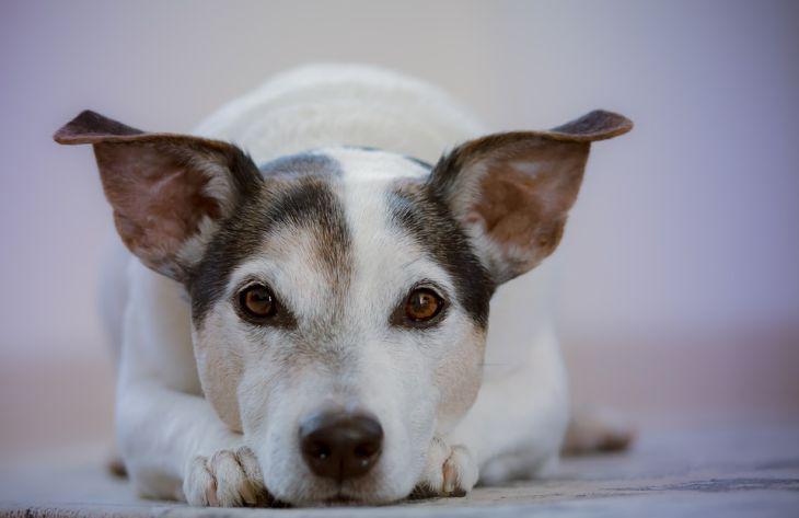 Специалисты выяснили, что собак нельзя кормить сырым мясом