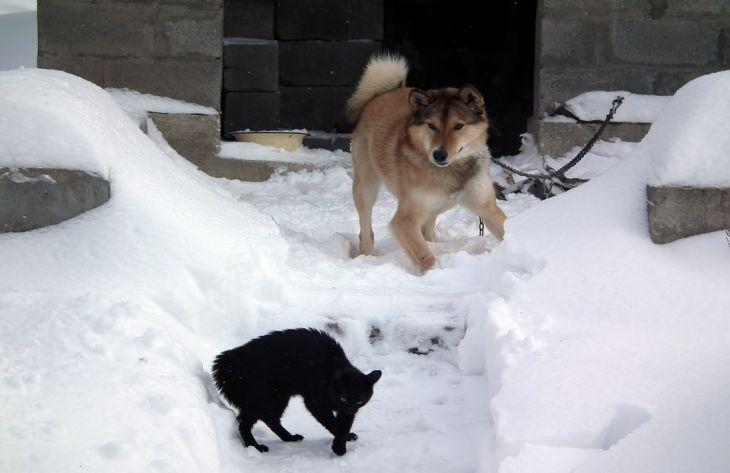Исследователи выяснили, почему кошки враждуют с собаками